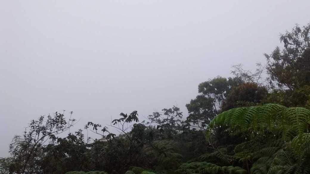 3.a. Rio - Blurry Pico da Tijuca view